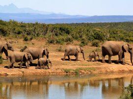 Spot on Travel Sydafrika