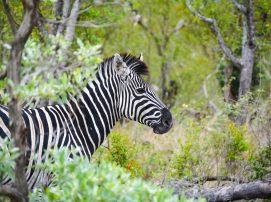 Spot on Travel Krüger National Park Sydafrika